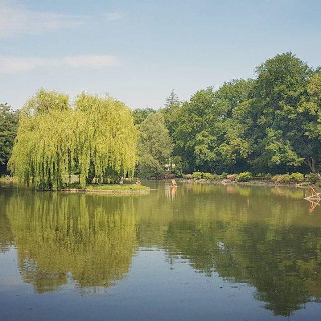 Lieblingsort badenbeiwien doblhoffpark rosarium see myplace trauerweide austrianblogger